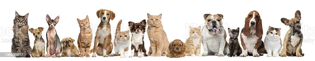 Group of cats and dogs stock photo