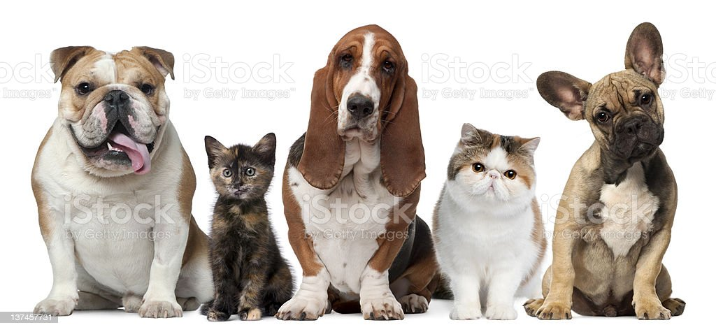 Group of cats and dogs royalty-free stock photo