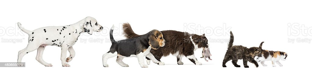 Group of cats and dogs walking stock photo