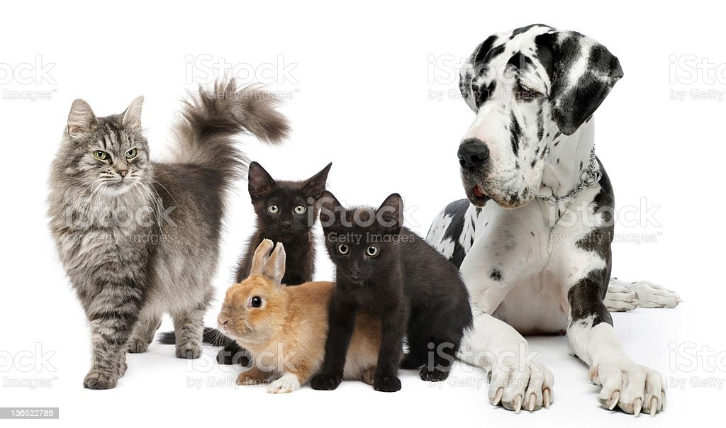 Group of cats, dogs and rabbit stock photo