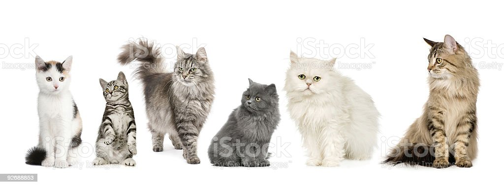 Group of cats in a row stock photo