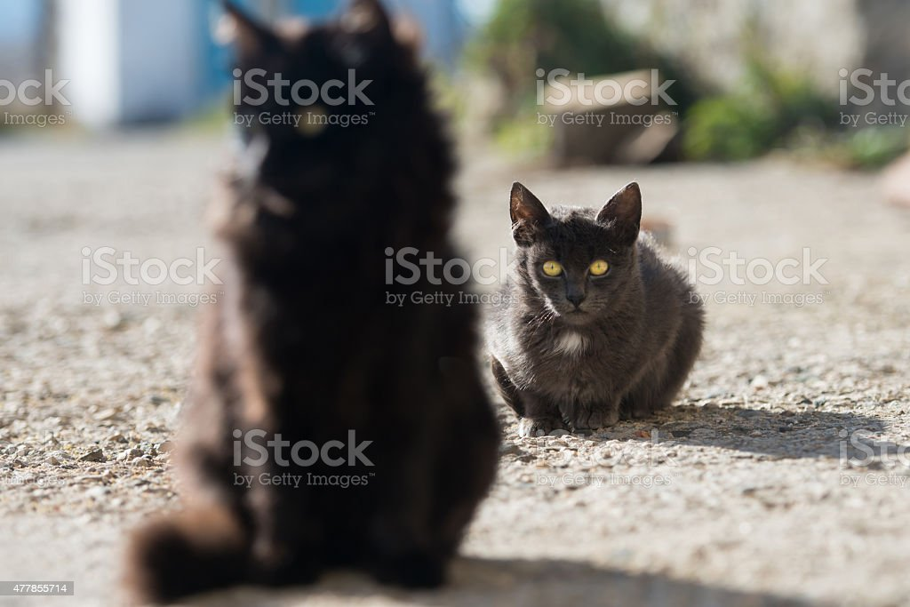 Group of cats stock photo