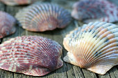 Group of colorful scallops on wooden plank