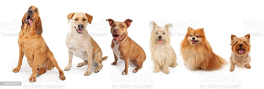 Group of Common Breed Dogs From Large to Small royalty-free stock photo