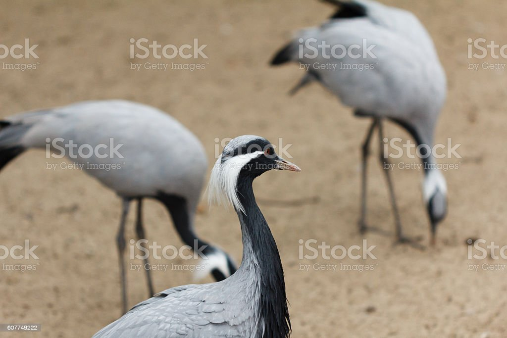 Group of cranes standing stock photo