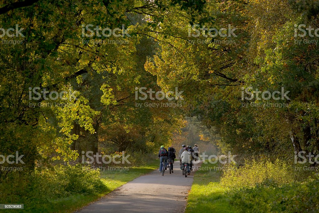 Group of cyclists riding on path through forest (XXL) royalty-free stock photo