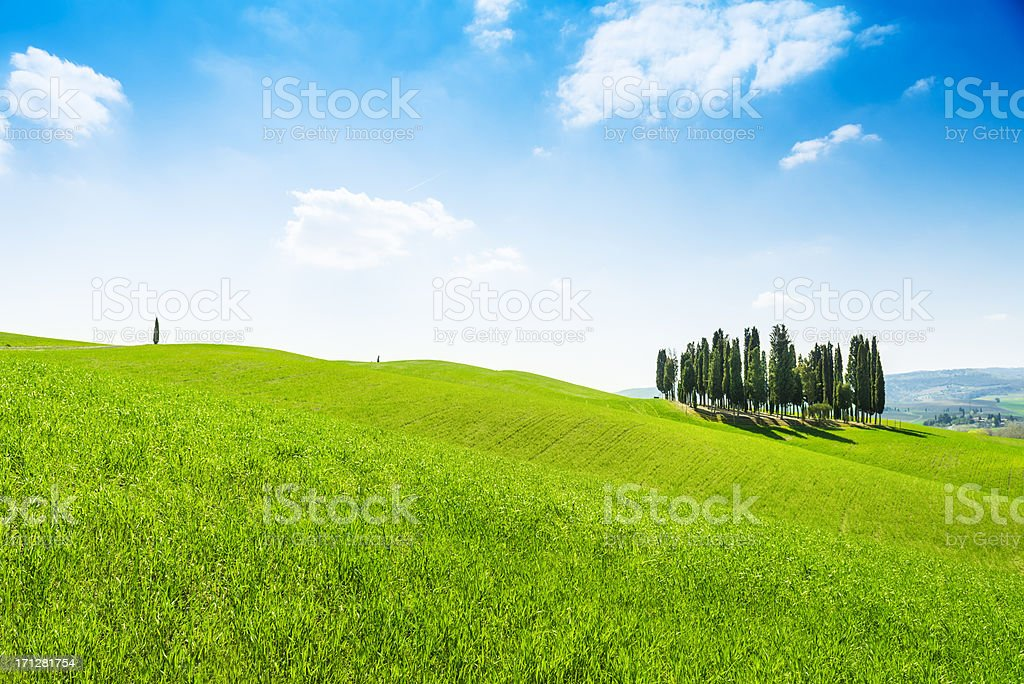 Group of Cypress trees in Val d'Orcia, Tuscany royalty-free stock photo