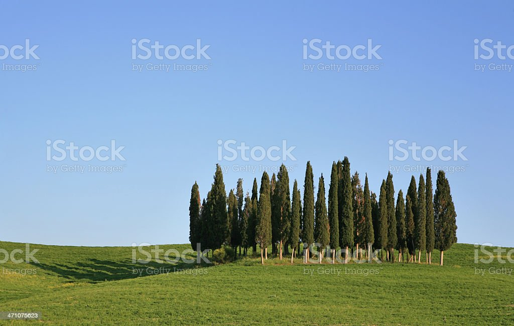 Group of cypresses in Val d'Orcia, Tuscany Italy royalty-free stock photo