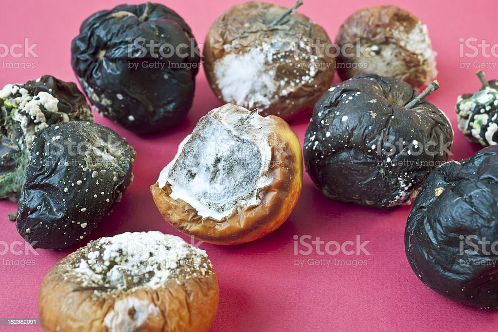 Group of decaying apples  of various colors on  purple background. royalty-free stock photo