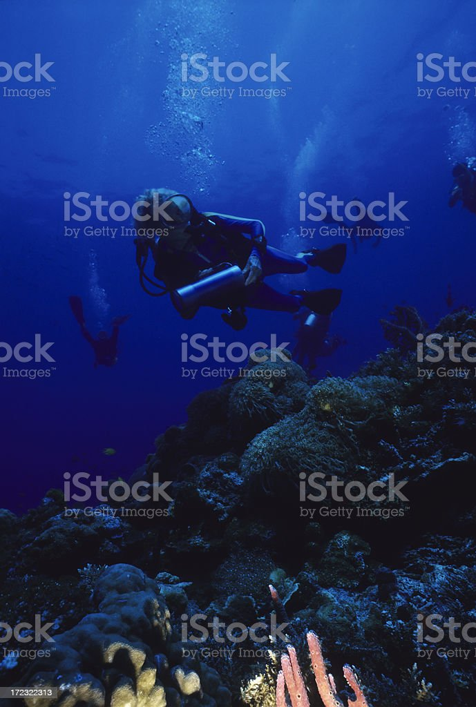 Group Of Divers royalty-free stock photo