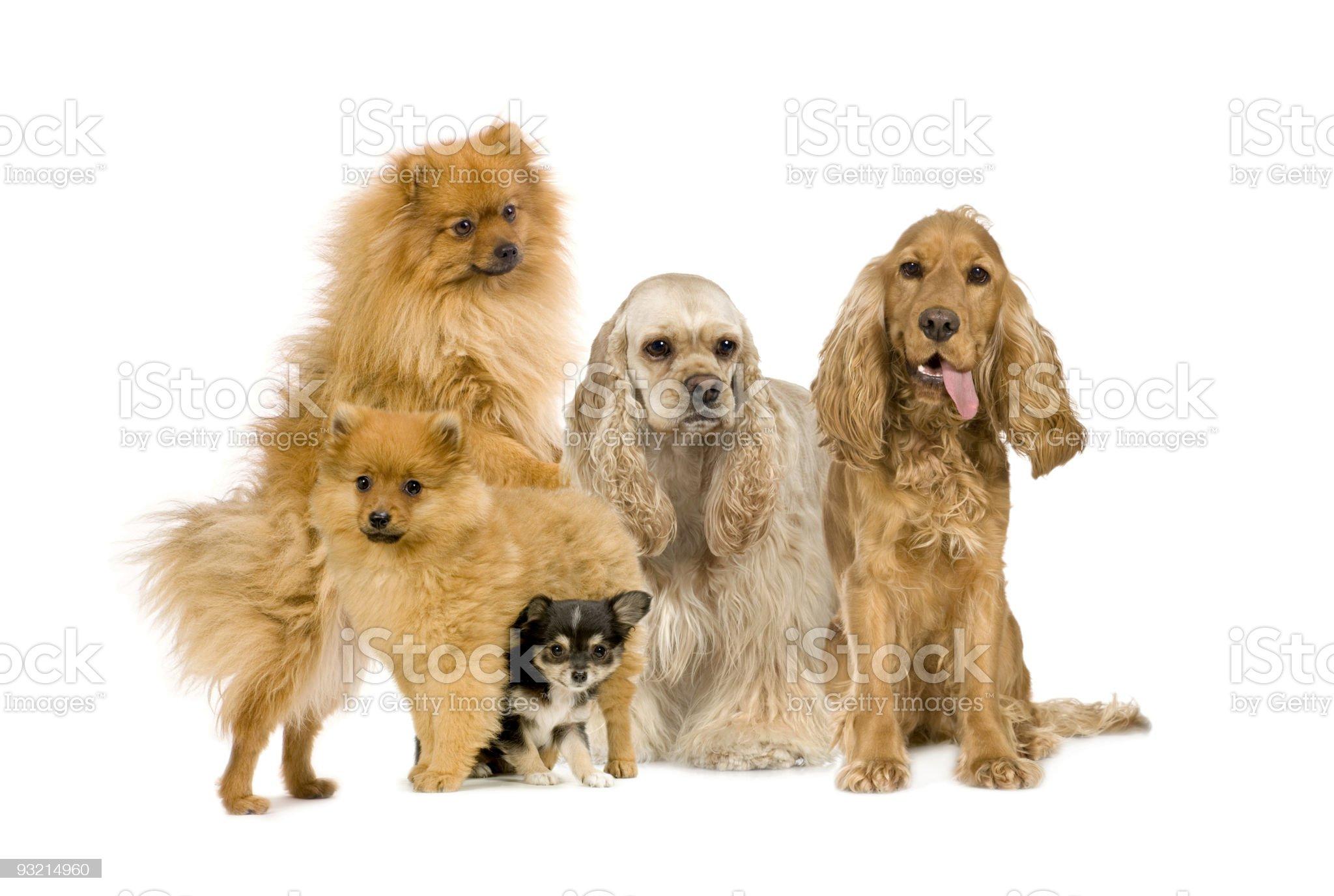 Group of dog royalty-free stock photo