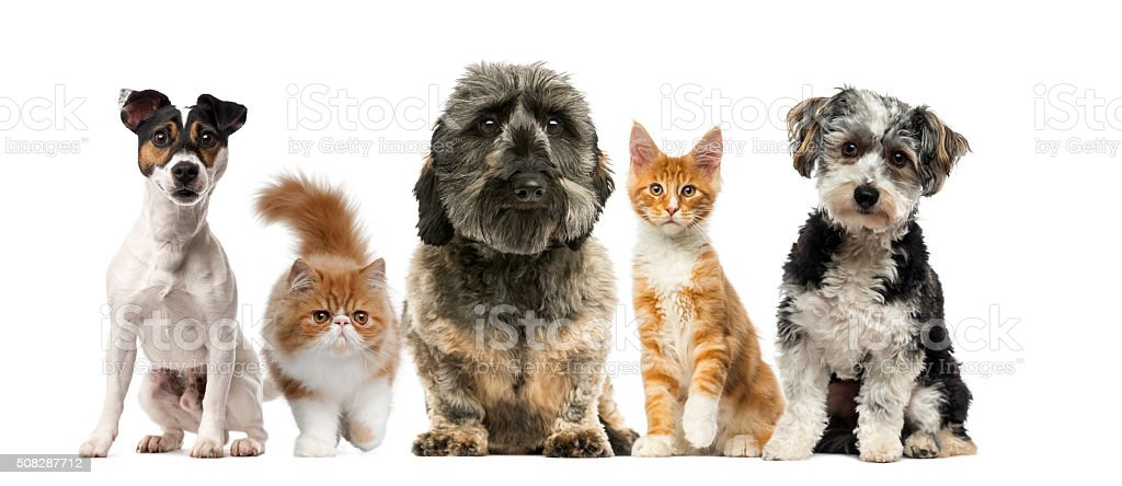 Group of dogs and cats stock photo