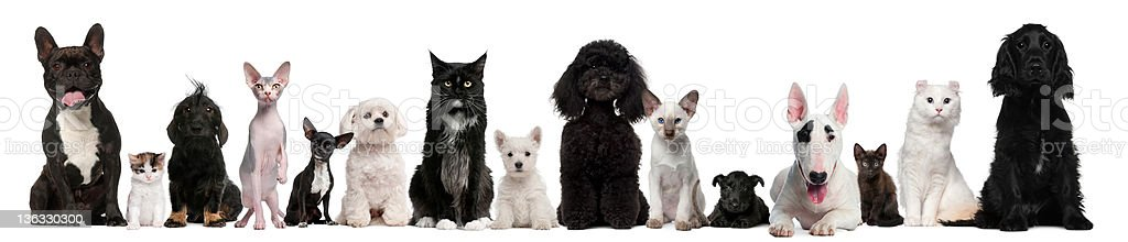 Group of dogs and cats sitting royalty-free stock photo