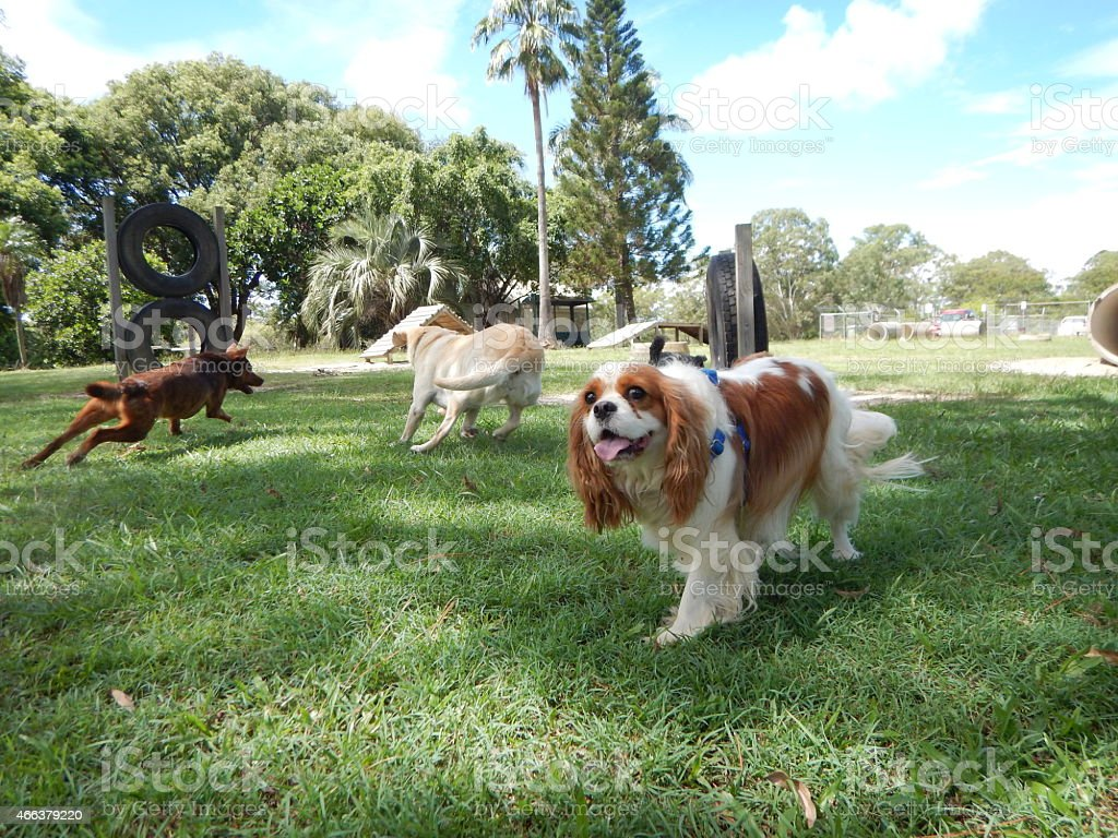 Group of Dogs in a dog park stock photo