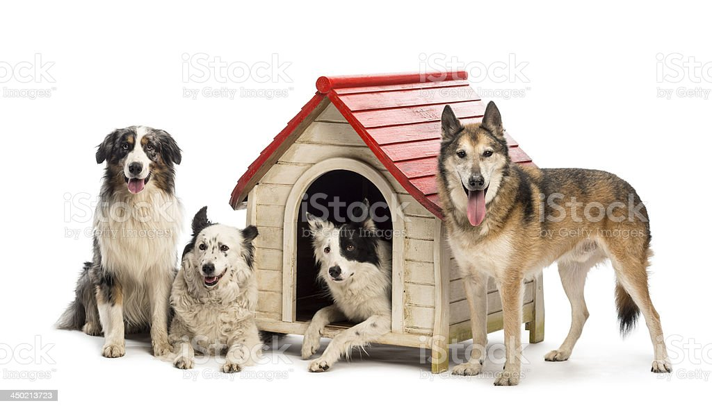 Group of dogs in and surrounding a kennel royalty-free stock photo