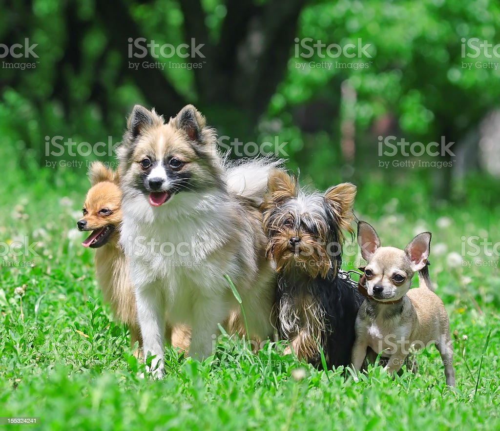 Group of dogs royalty-free stock photo