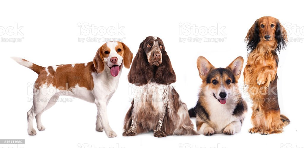 group of dogs stock photo