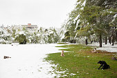 group of   dogs sitting in   park covered with snow   grass
