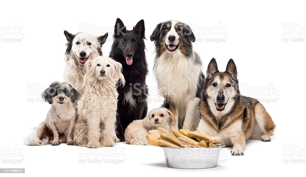 Group of dogs with a bowl full stock photo