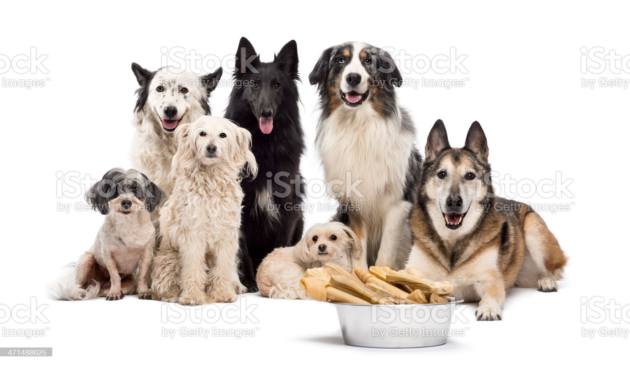 Group of dogs with a bowl full royalty-free stock photo