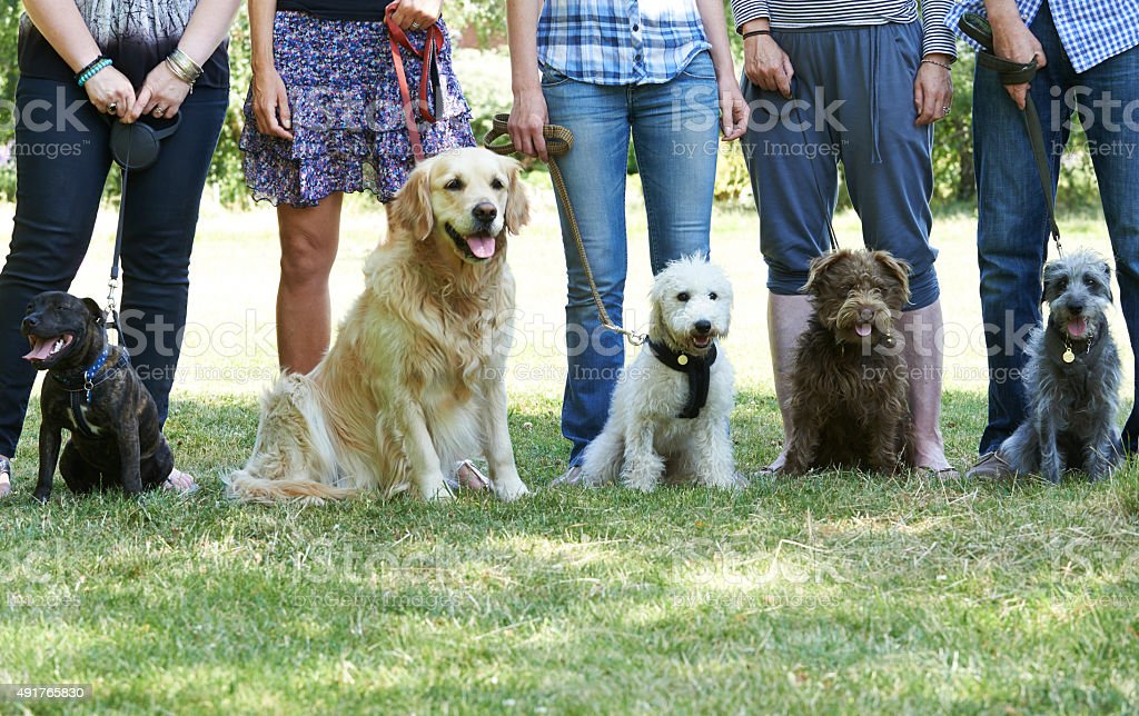 Group Of Dogs With Owners At Obedience Class stock photo