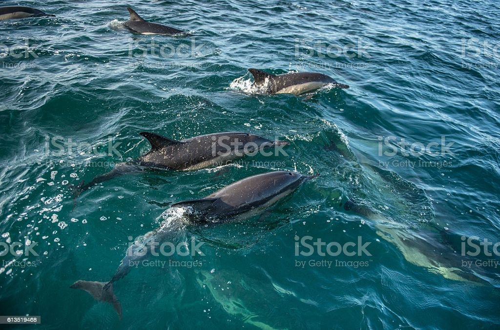 Group of dolphins stock photo