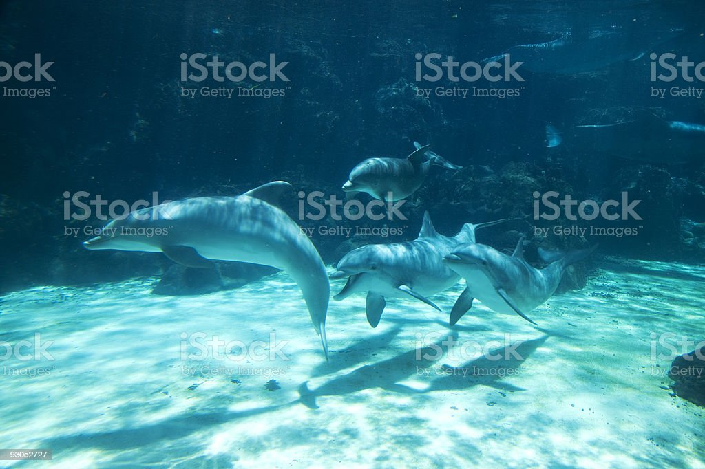 Group of Dolphins Swimming Underwater royalty-free stock photo