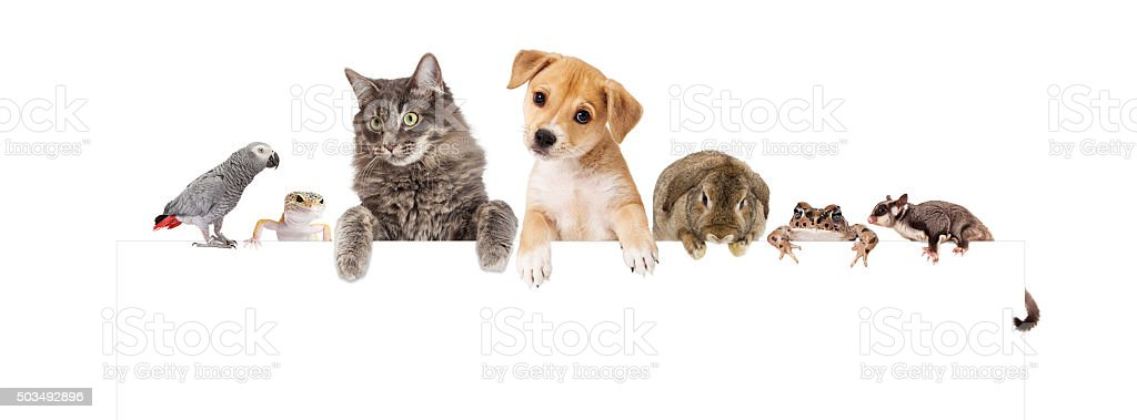 Group of Domestic Pets Over White Banner stock photo