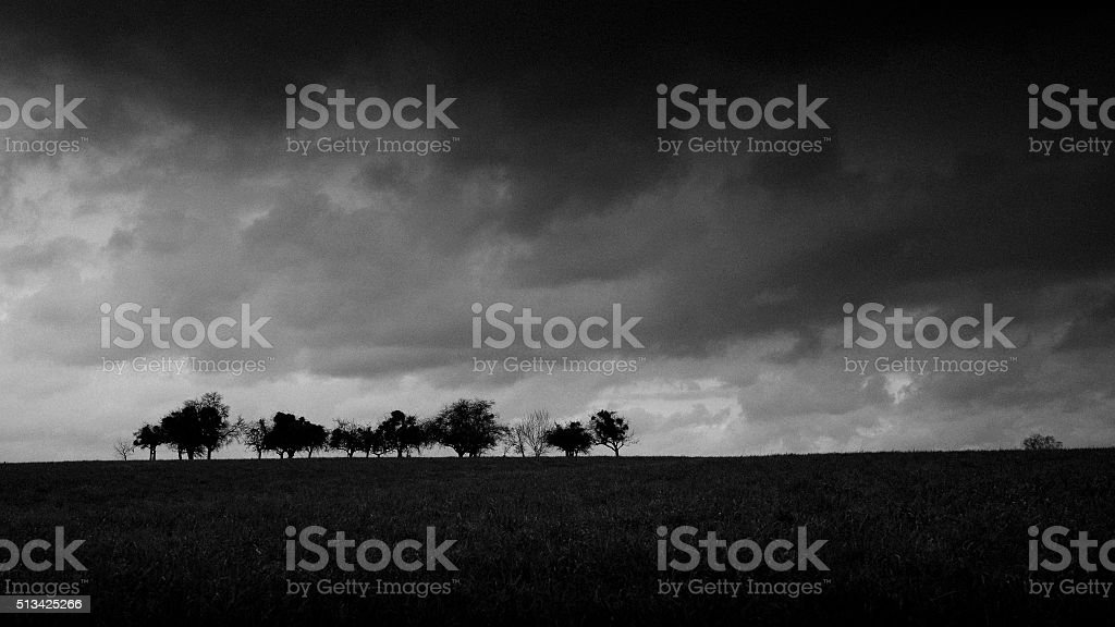Group of Eifel trees under moody sky in Luxembourg stock photo