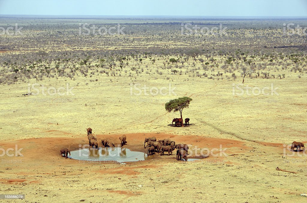 Group of elephants at a waterhole royalty-free stock photo