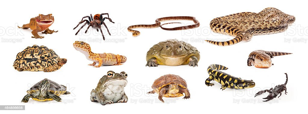 Group of Exotic Pets stock photo