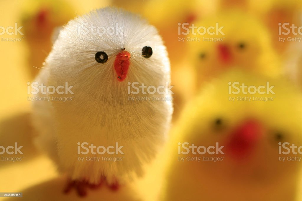 group of fake easter chicks royalty-free stock photo