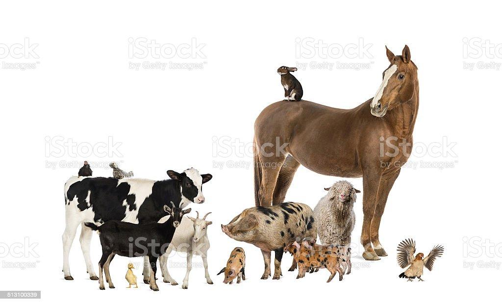Group of farm animals stock photo