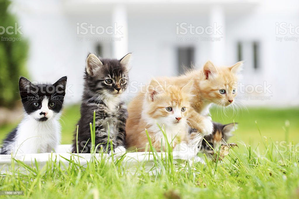Group of five beautiful cats. stock photo