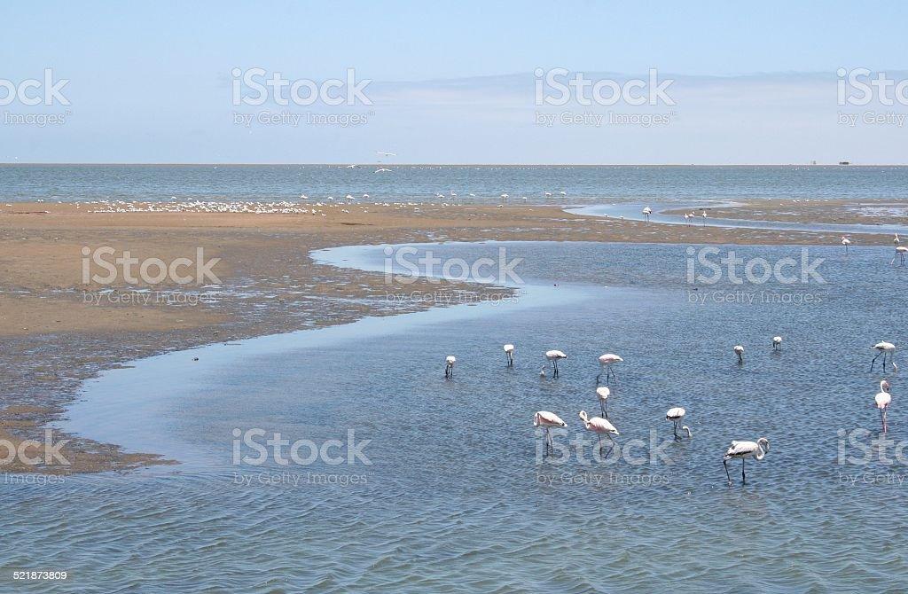 Group of Flamingos, Lagoon, Walvis Bay, Namibia, Africa stock photo