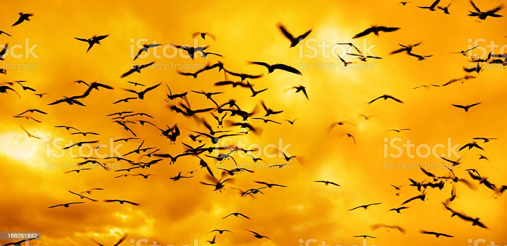 group of flying birds over sunset royalty-free stock photo