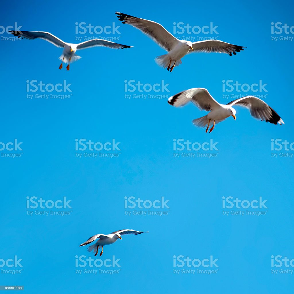 group of flying seagulls royalty-free stock photo