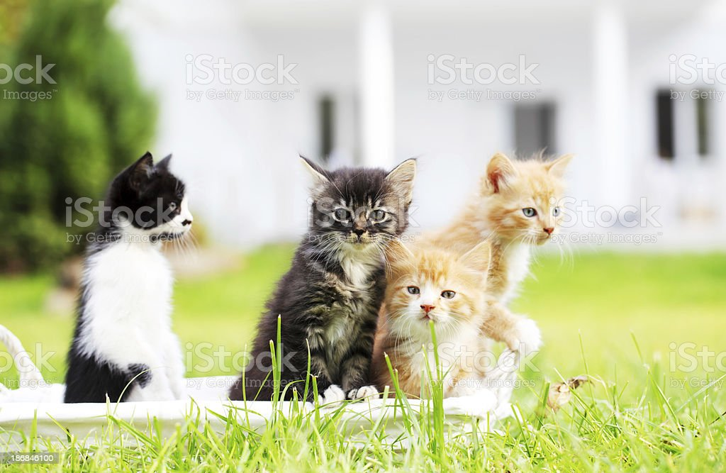 Group of four beautiful cats. stock photo