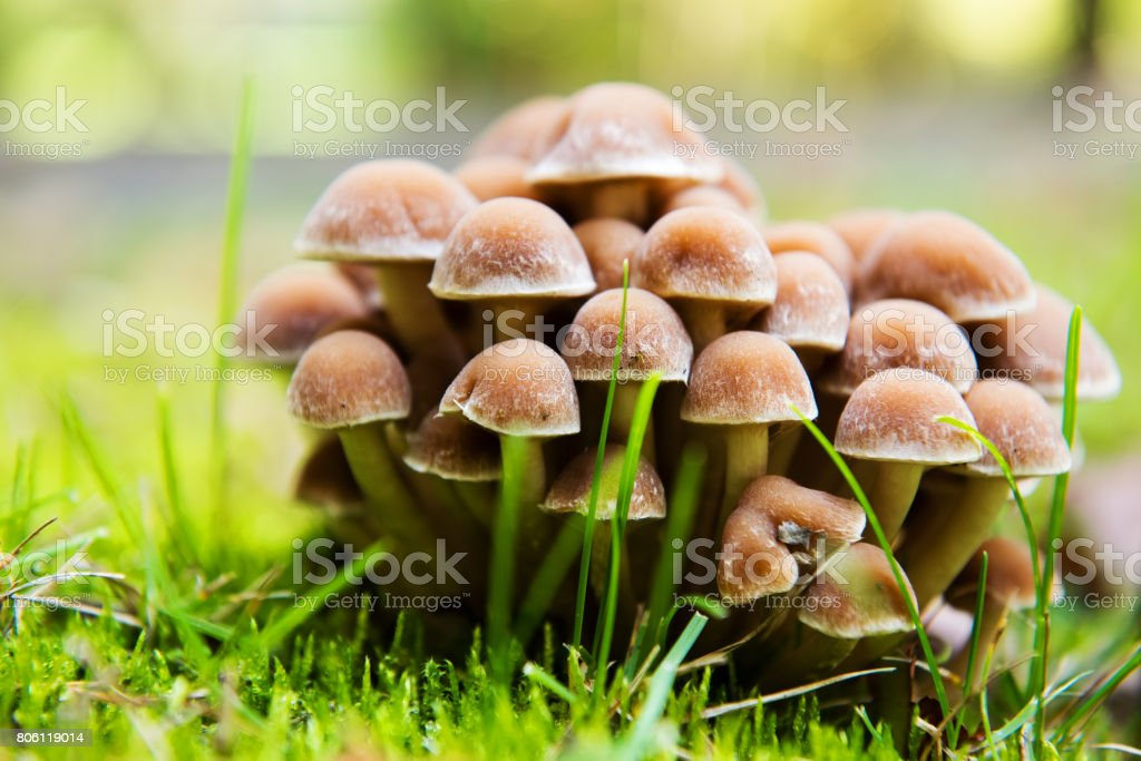 Group of fresh natural edible mushrooms in autumn forest stock photo