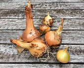 Group of fresh onions