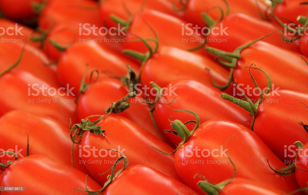 Group of fresh red tomatoes oval. Italy stock photo