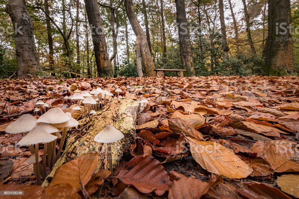 Group of fungus foreground and bench in autumn forest background stock photo