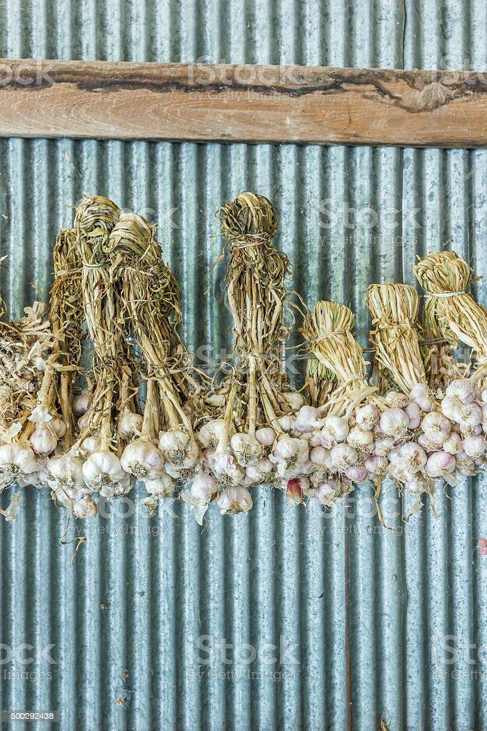group of garlic stock photo
