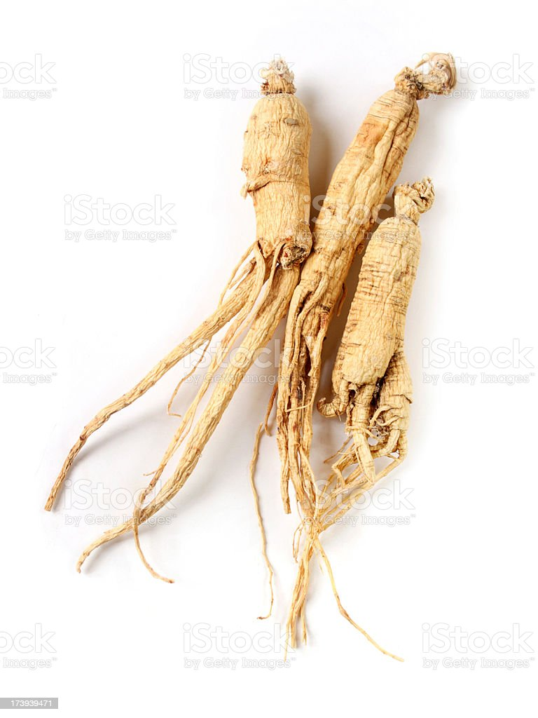 Group of Ginseng Root royalty-free stock photo
