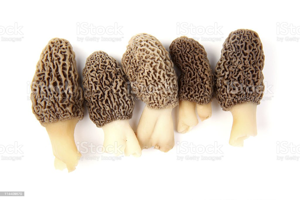 Group of gray morel mushrooms isolated on white stock photo