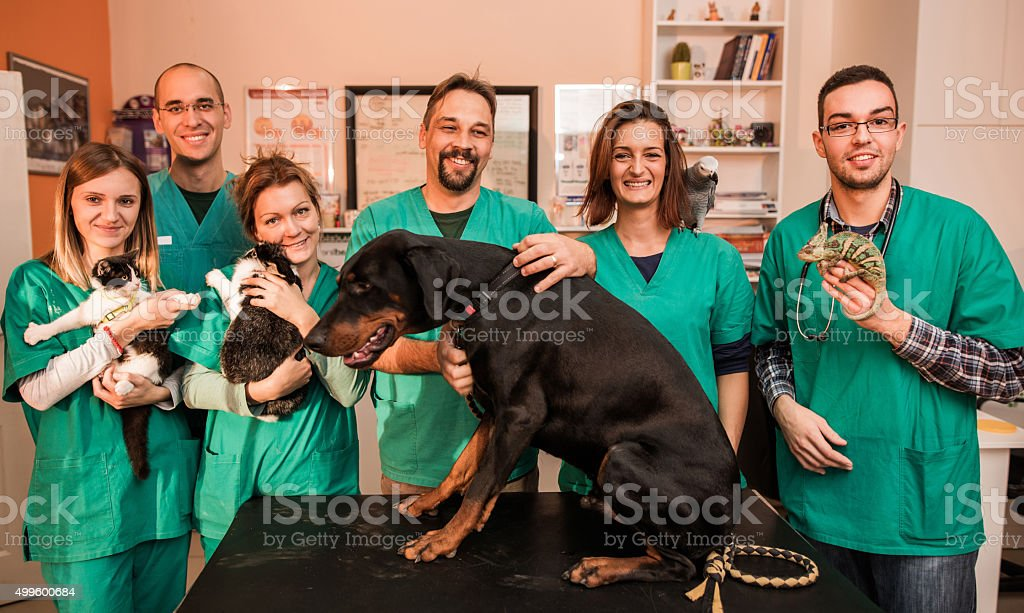 Group of happy veterinarians with animals at vet's office. stock photo