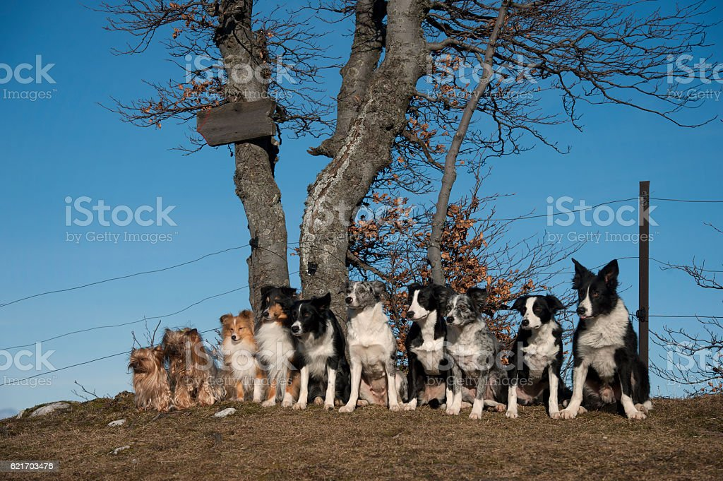 Group of healthy dogs stock photo