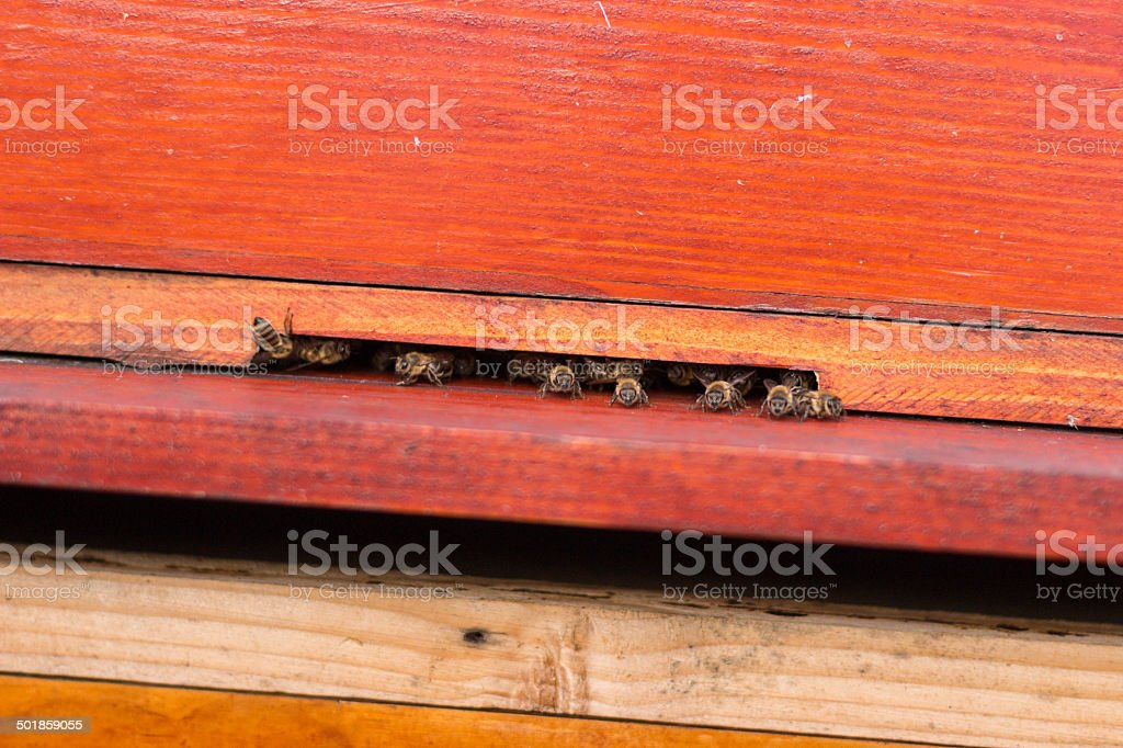 Group of honeybees flying into a vintage beehive royalty-free stock photo