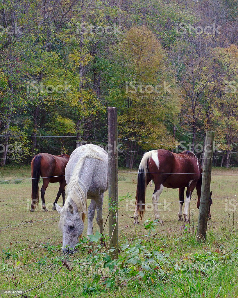 Group of Horses in Autumn Pasture stock photo