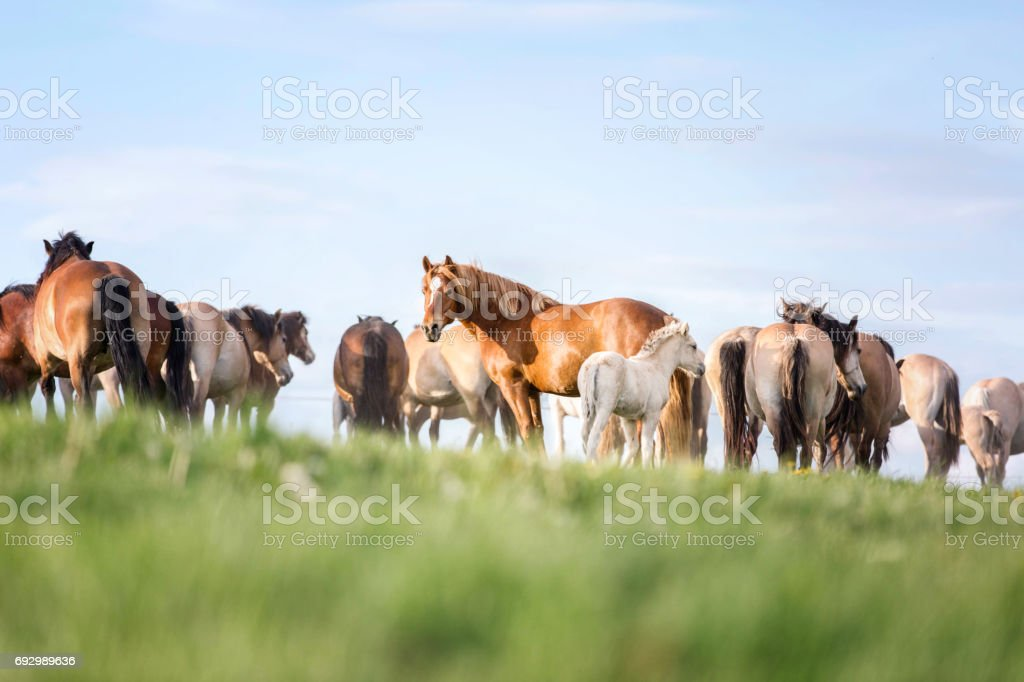 Group of horses on the pasture. stock photo